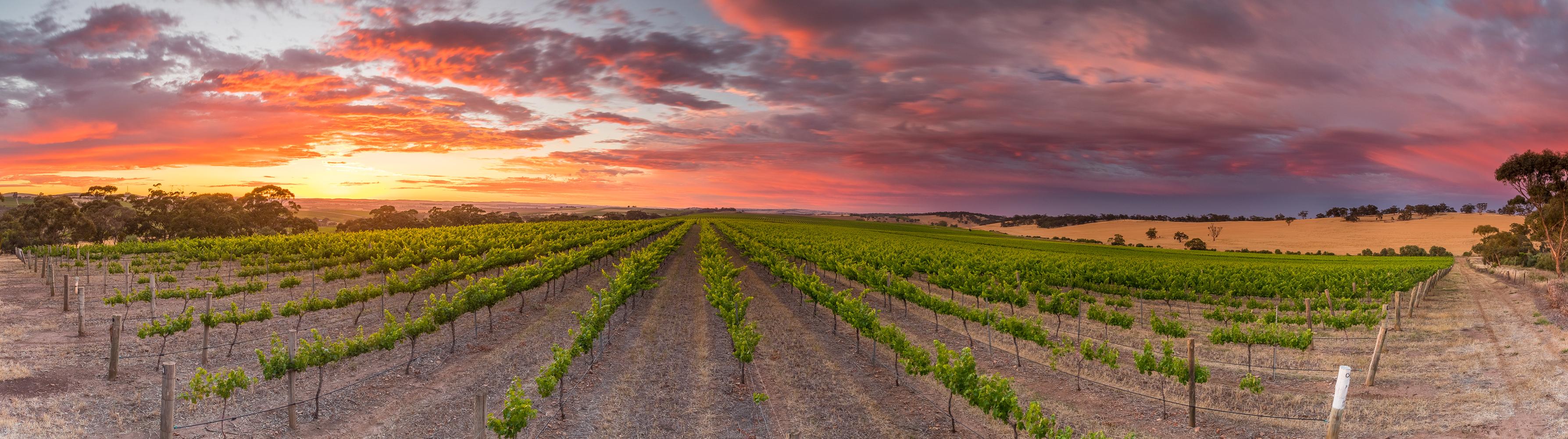 Velvet & Willow Wines